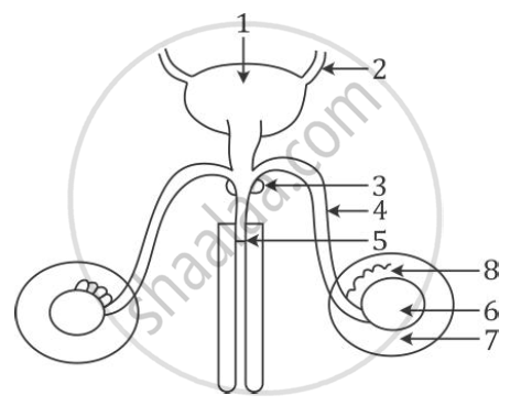 Solution For The Diagram Given Below Shows The Male Urinogenital