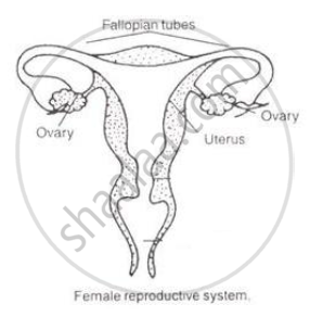 Draw a Sectional View of Human Female Reproductive System ...